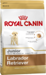 Labrador Retriever Junior (Лабрадор)